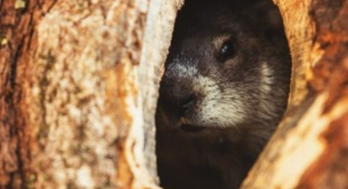 Energy Market Watch: Groundhog Edition