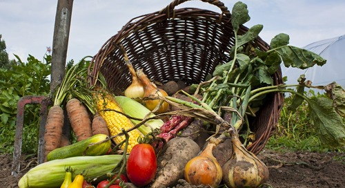 11 Big Benefits to Using Local Organic Produce at Your Restaurant