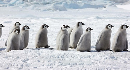 Legendary Snow Hill: March to the Emperor Penguins with Quark
