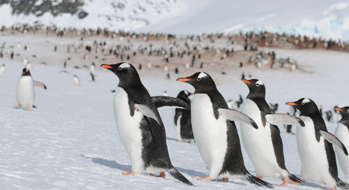 Explore Global Climate Change Causes & Solutions in Antarctica with The Nature Conservancy
