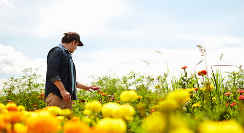 Besotted by blossoms: the evolving Aussie flower industry