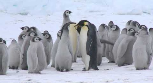 Legendary Snow Hill: March to the Emperor Penguins