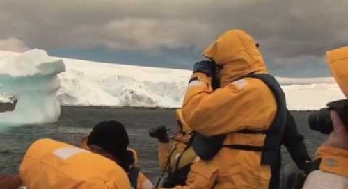 Day In The Life: Falklands, South Georgia, Antarctica