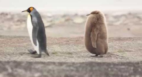 Penguin shenanigans!