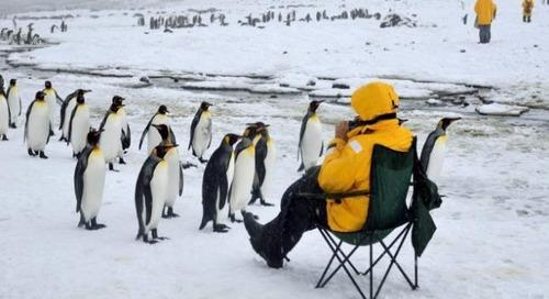 Meet 5 Fascinating Antarctic Penguins