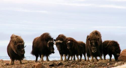 10 Reasons to Visit Greenland