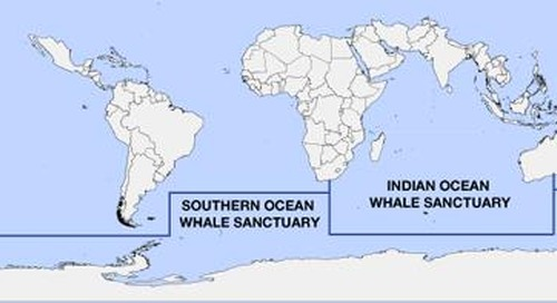 United Nations Court Ends Japan's Antarctic Whaling Program