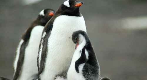 Why Polar Expeditions Make the Best Family Adventure Vacations