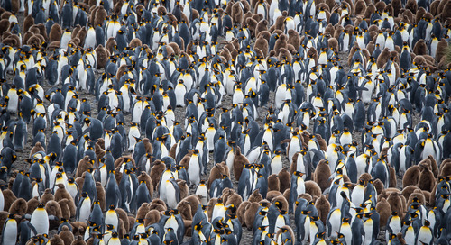 Sustainable, Responsible Polar Tourism with AECO & IAATO