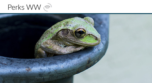 The Pet Frog Effect: Using Humor in your Brand Strategy