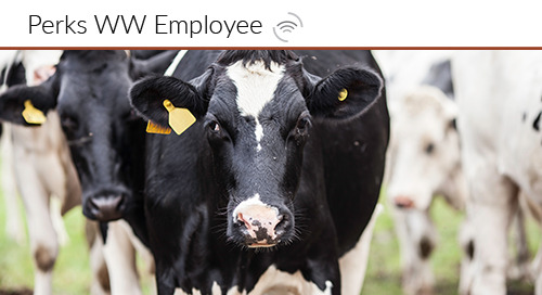 Happy Cows and Hands-Free Employee Engagement