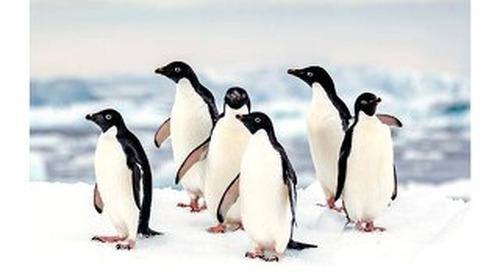 Antarctica Destination Guide