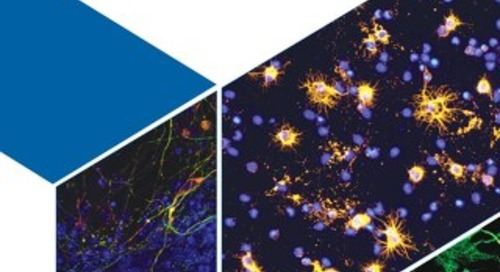 R&D-systems-neural-cell-culturing-br