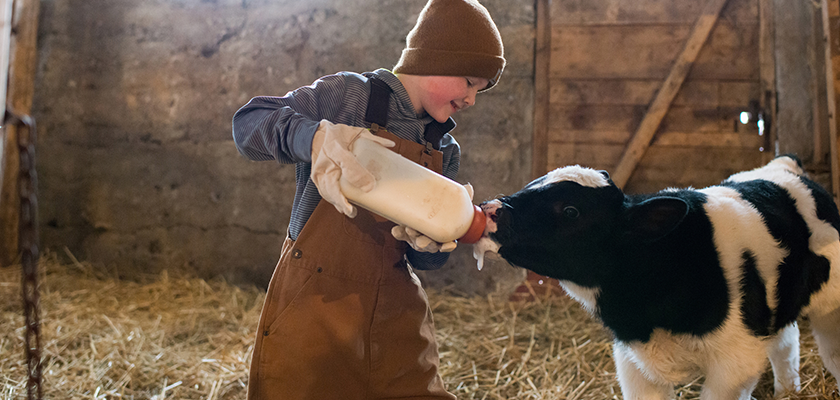 young boy bottling feeding a black and white calf