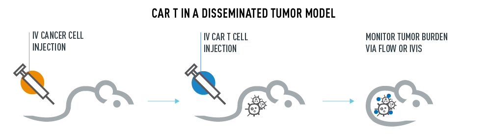 CAR T in a solid Tumor Model