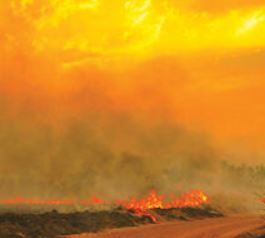 Managing Wildfire Risk for Contractors