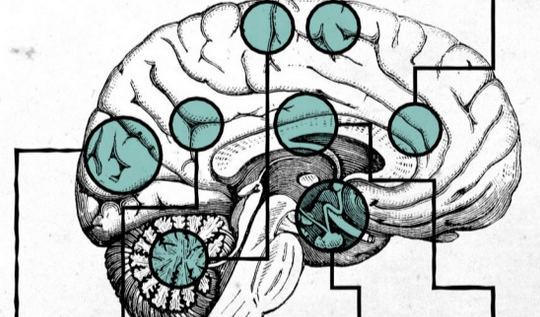 Neuroscience of Storytelling