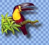 toucan2.png
