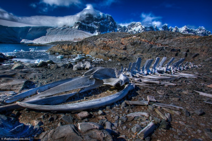 Dave Bouskill from the Planet D shares his top Antarctic photography tips.
