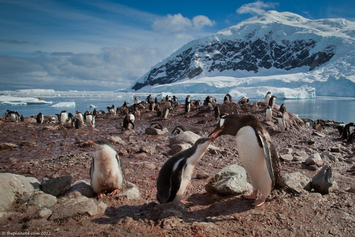 Gentoo penguins and other Antarctic wildlife make for fantastic wildlife photography on the 7th continent.
