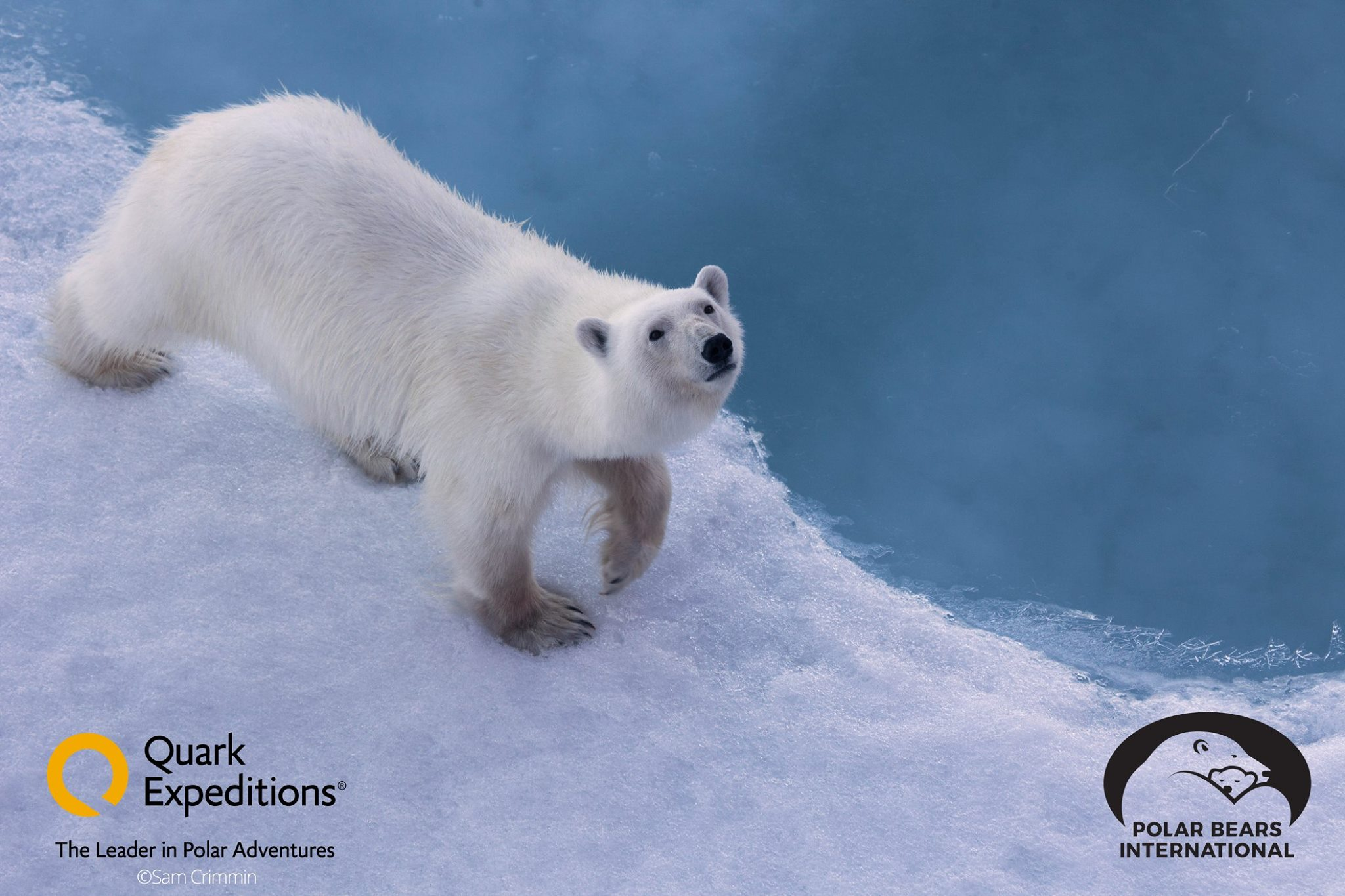 Join Polar Bears International experts en route to the North Pole with Quark Expeditions to learn more about polar bears in their natural habitat!