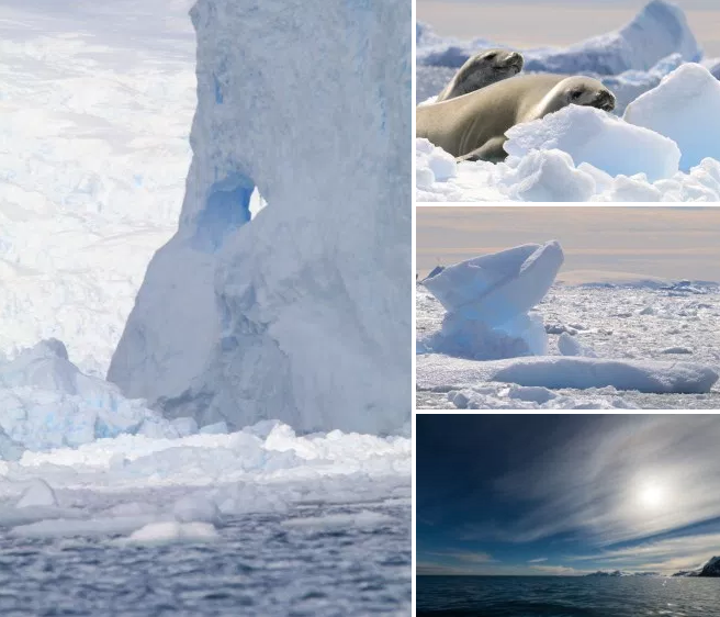 Weddell seals peek out from behind chunks of ice on an iceberg in Cierva Cove