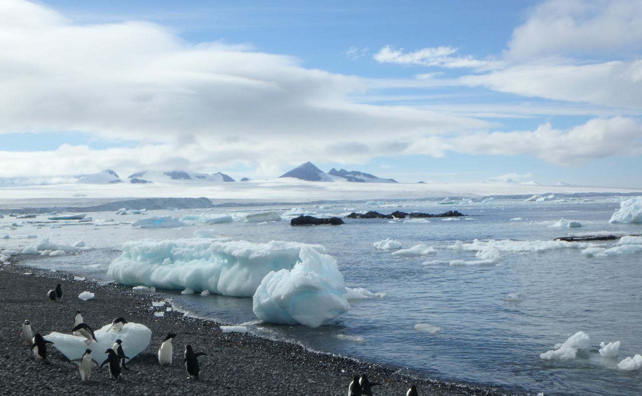 Adelie penguins play amidst great chunks of ice on a frigid Antarctic beach, the mountains of the peninsula on the horizon.
