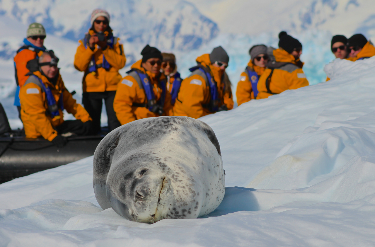 "Visit early in the season to see Antarctic animals like this ""smiling"" leopard seal hauled out on unbelievably clean, pure ice and snow. Photo: Miranda Miller"