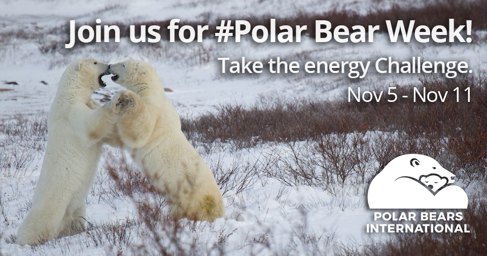 Take the Energy Challenge - Polar Bears International