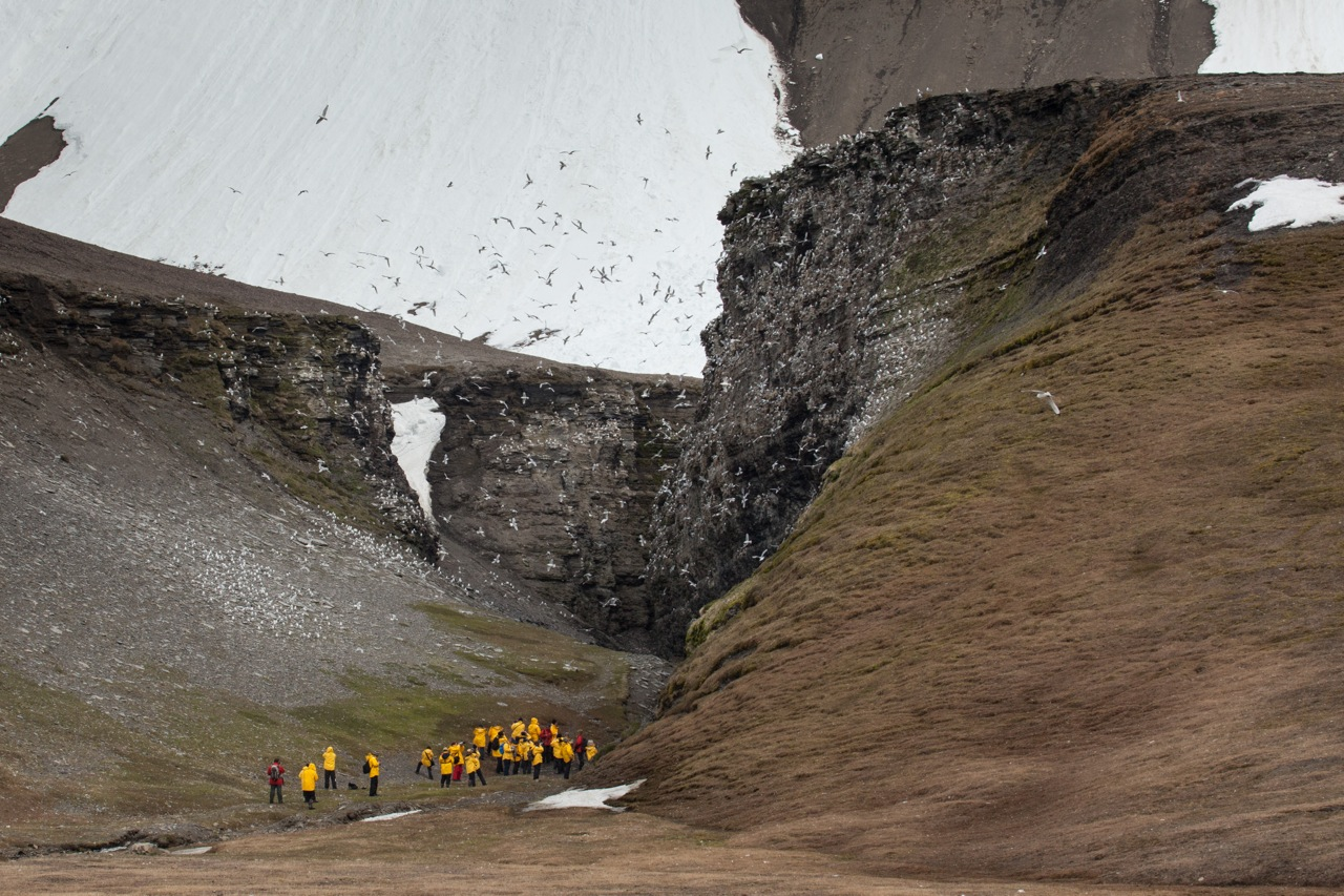 A staggering bird cliffs teems with swarming sea birds over the heads of Spitsbergen expedition passengers.