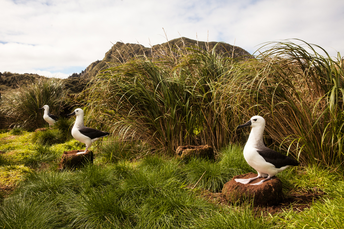 Birdlife in Nightingale Island - Photo by Sam Crimmin