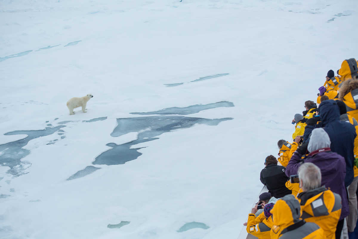 Polar bear spotted by Quark passengers in Svalbard