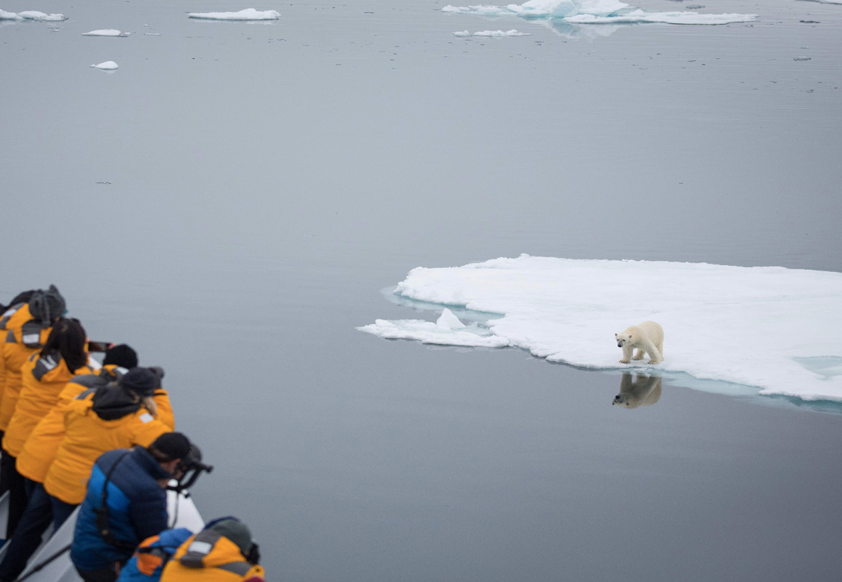 Spitsbergen passengers photograph a polar bear on a passing ice floe
