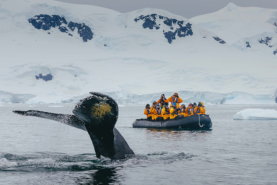 Passengers spot a whale fluke while on a zodiac cruise. Photo: David Merron