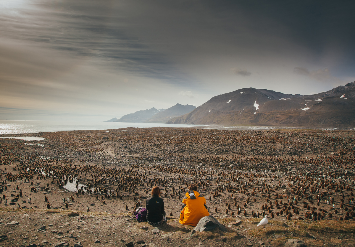 Passengers sit overlook a King penguin rookery in South Georgia. Photo by David Merron