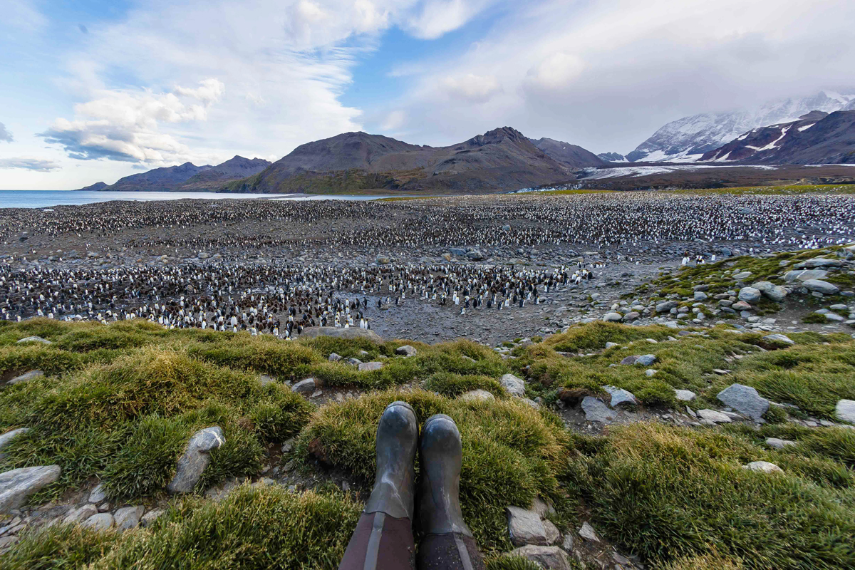Imagine sitting in front of this penguin colony in South Georgia. Photo: Nicky Souness