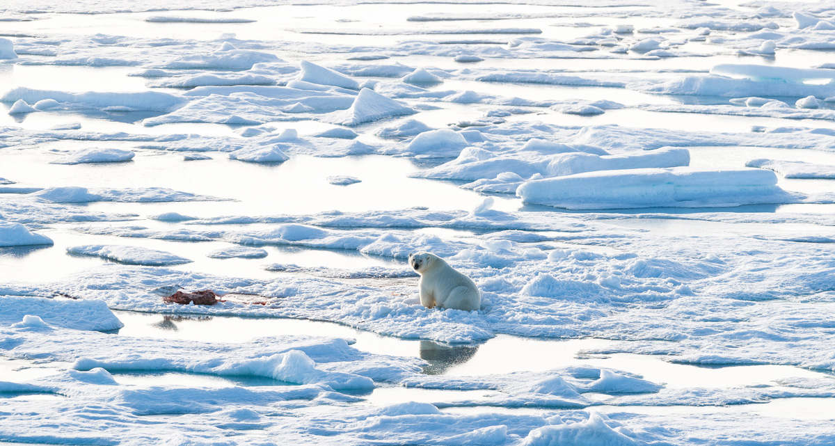 A polar bear sits on the ice.
