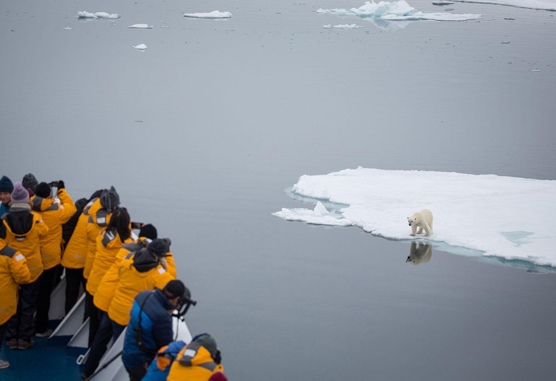 Curious polar bears in Svalbard