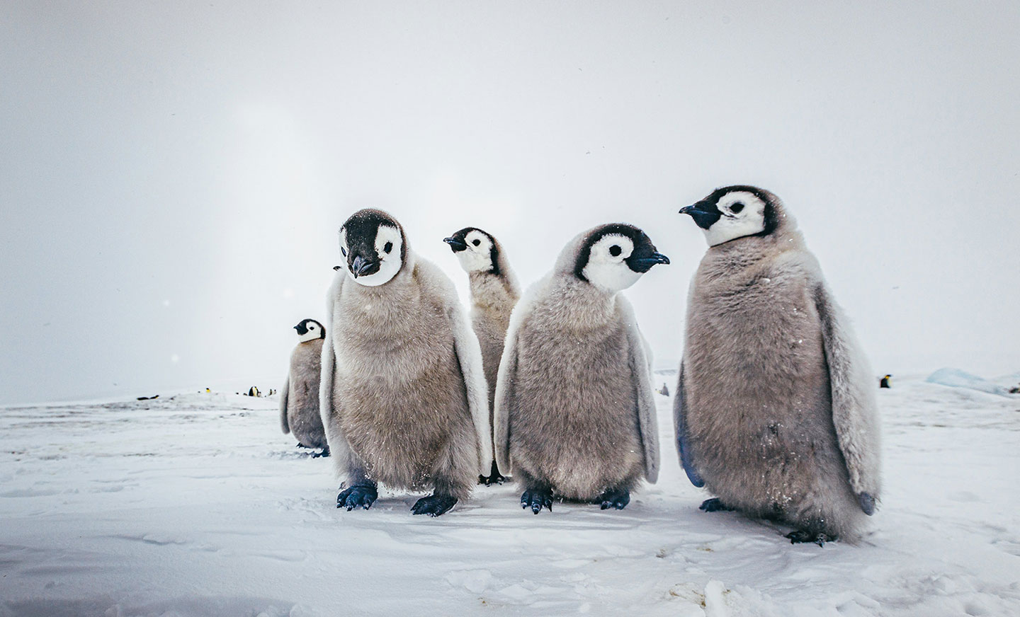How to see penguins in Antarctica
