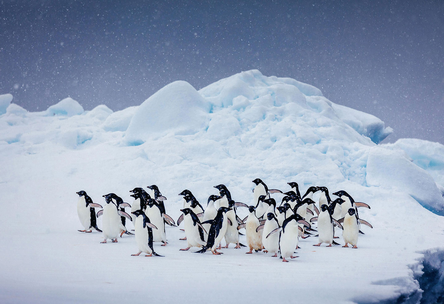 How to see penguins in Antarctica safely