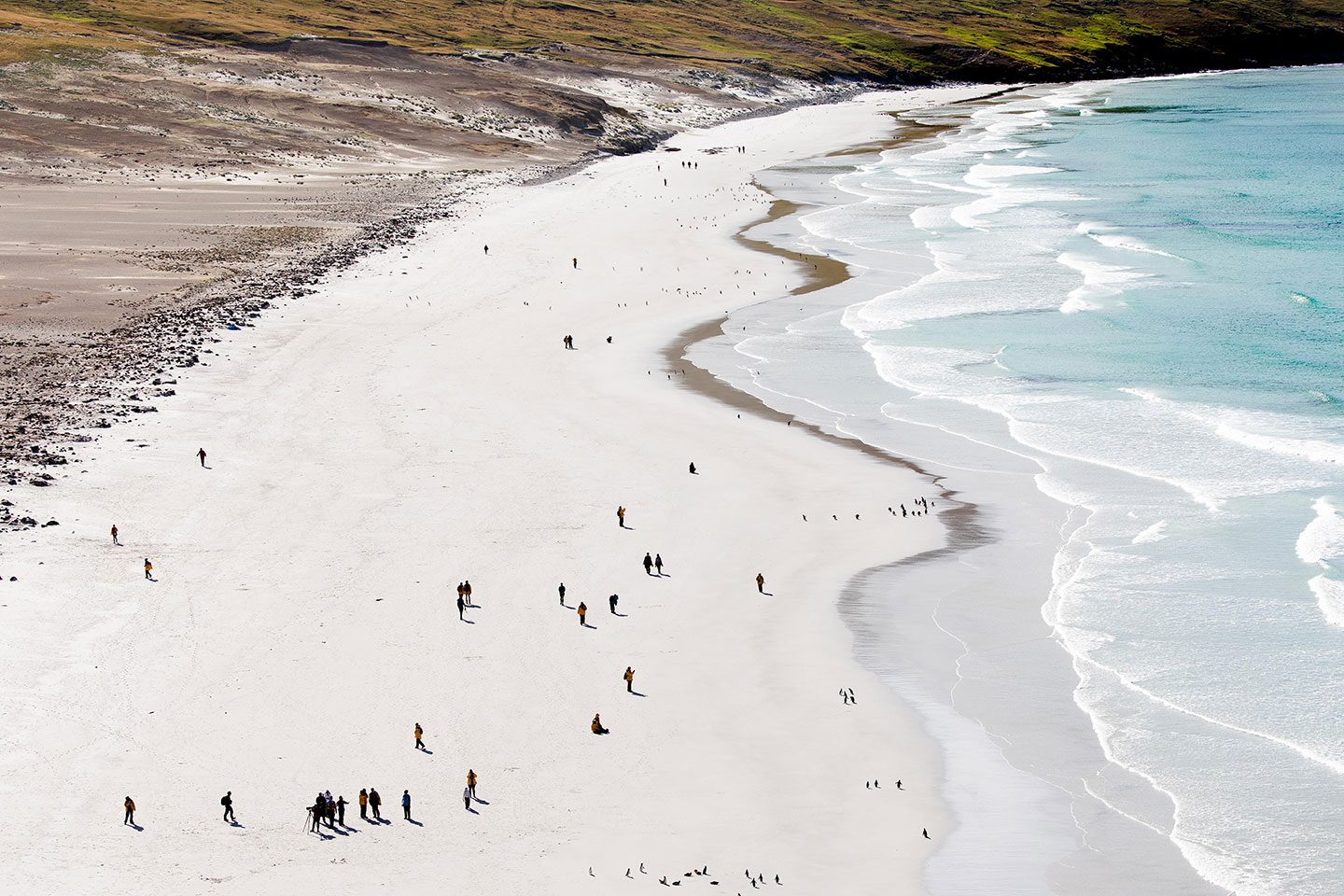 Visitors to the Falkland Islands are often surprised to discover so many sandy beaches on this remote sub-Antarctic island