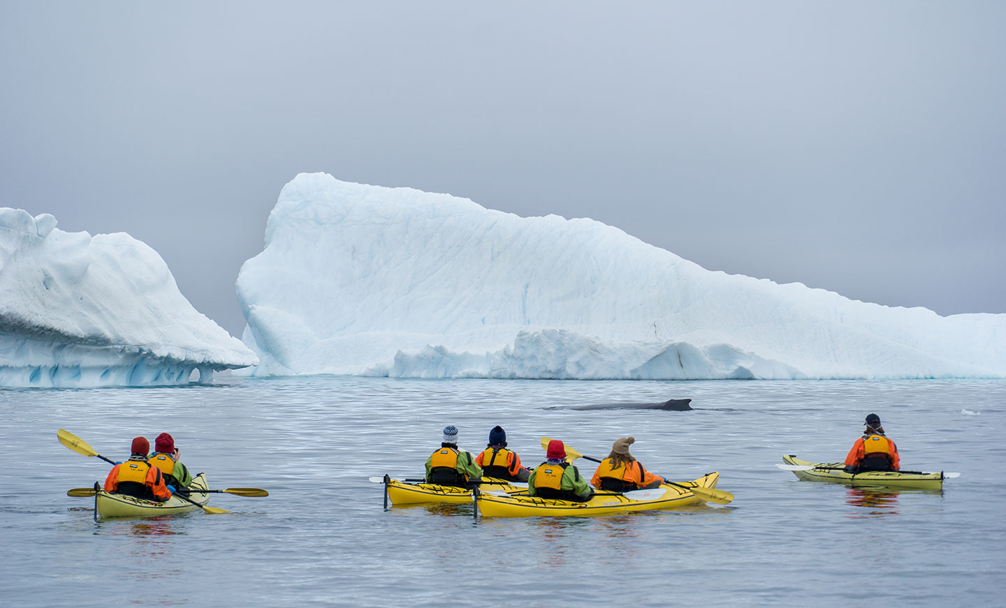 Quark Expeditions guests participate in the Sea Kayaking program during an Antarctic voyage