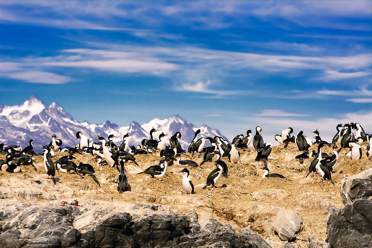 Bird-watching is a favourite activity of travelers visiting Patagonia as evident in this photo taken in the Beagle Channel.