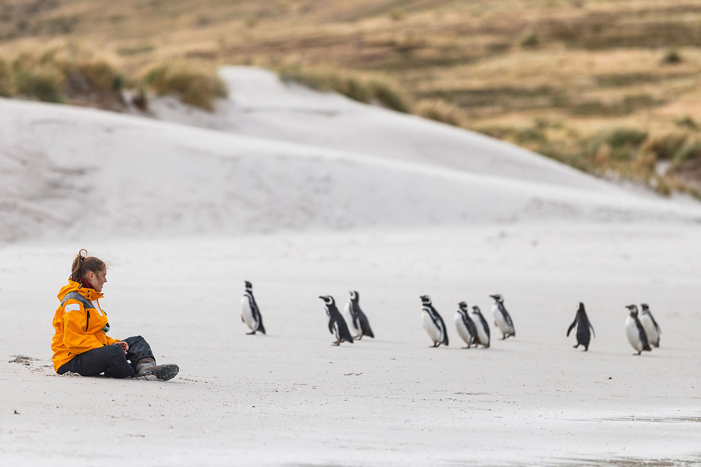 Here, a Quark Expeditions guest patiently waits for the penguins to come to her