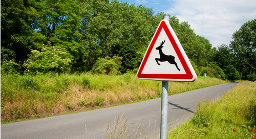Deer crossing warning sign on back road surrounded by greenery
