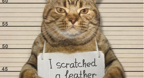 cliché chat prisonnier