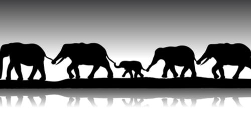 Elephants in a line