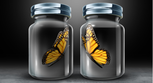 Two butterflies in separate glass jars moving toward each other