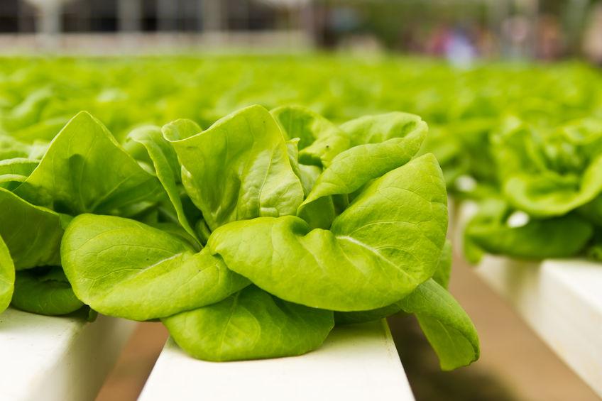 indoor vegetable farm