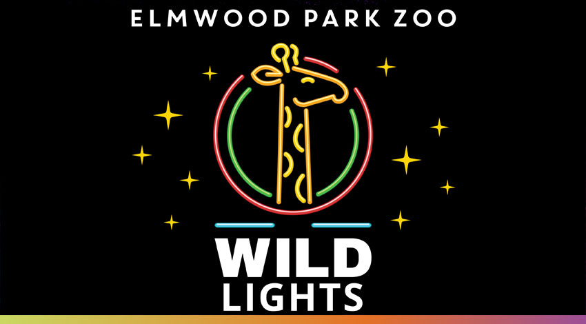 Setting the Holidays Aglow with Wild Lights at the Elmwood Zoo